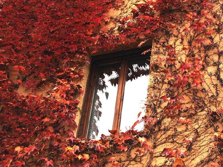 Mejores balcones floridos kideak.blogspot.com Slide 1