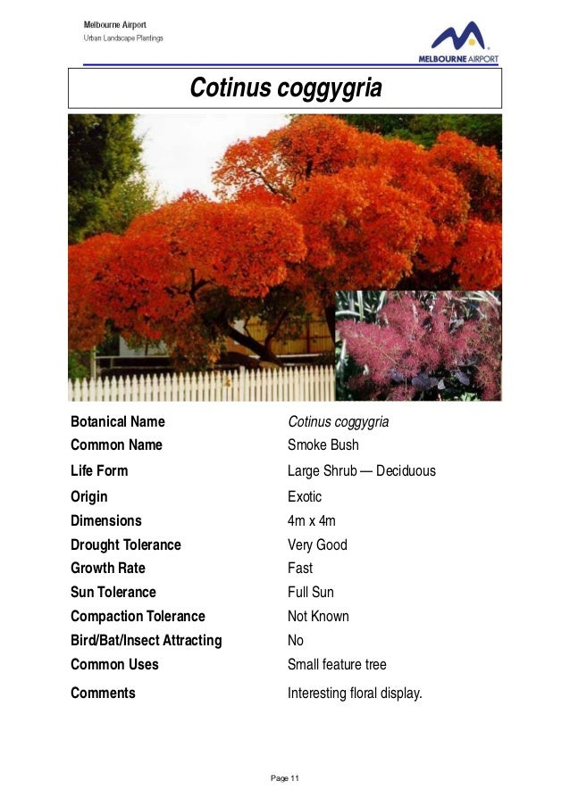 Urban Landscape Plantings A Selection Of Plant Species Suitable For