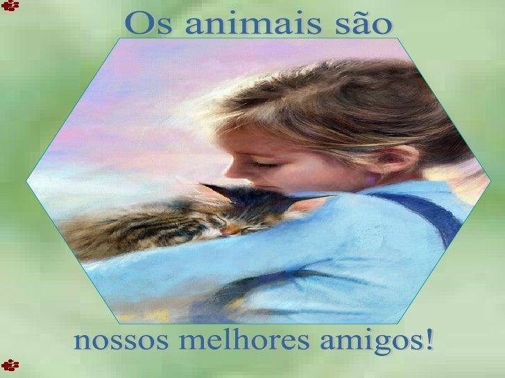 Os animais são nossos melhores amigos!