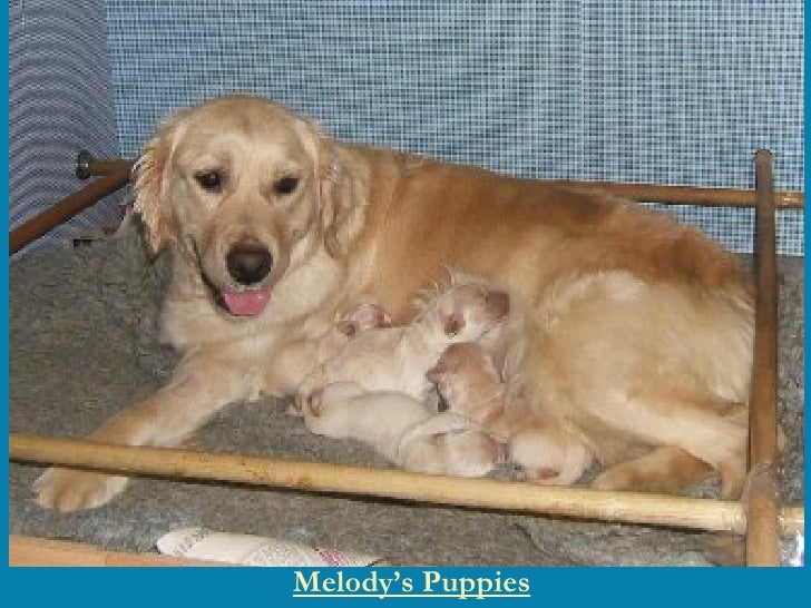 Melody's Puppies