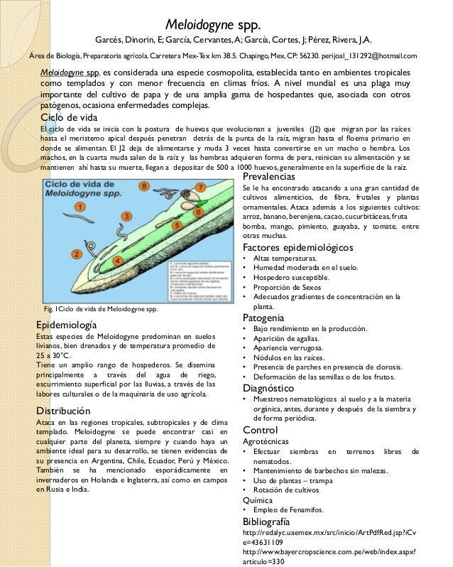 Meloidogyne spp. Garcés, Dinorin, E; García, Cervantes, A; García, Cortes, J; Pérez, Rivera, J,A. Área de Biología, Prepar...
