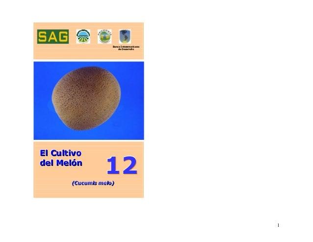 111222 Banco Interamericano de Desarrollo EEElll CCCuuullltttiiivvvooo dddeeelll MMMeeelllóóónnn (((CCCuuucccuuummmiisss m...