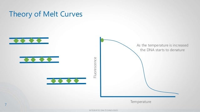 dna melting curve Linear functions applications dna melting temperature  dna secondary structure, the double helix, is held together by hydrogen bonds between base pairs.