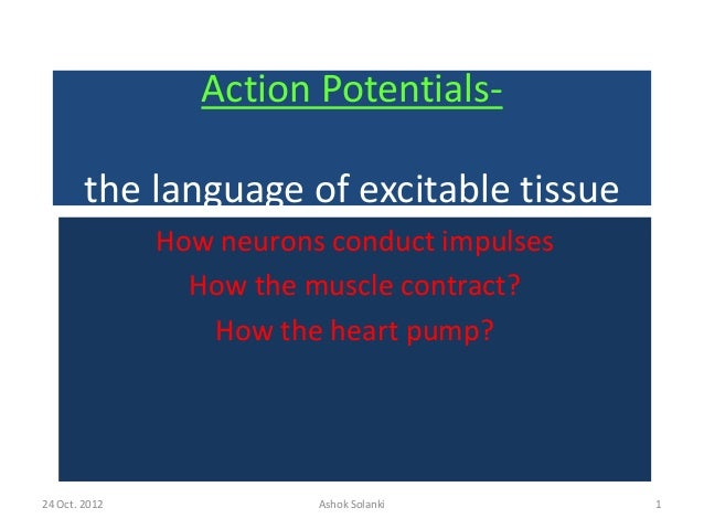24 Oct. 2012 Ashok Solanki 1 Action Potentials- the language of excitable tissue How neurons conduct impulses How the musc...