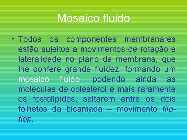 Mosaico fluido <ul><li>Todos os componentes membranares estão sujeitos a movimentos de rotação e lateralidade no plano da ...