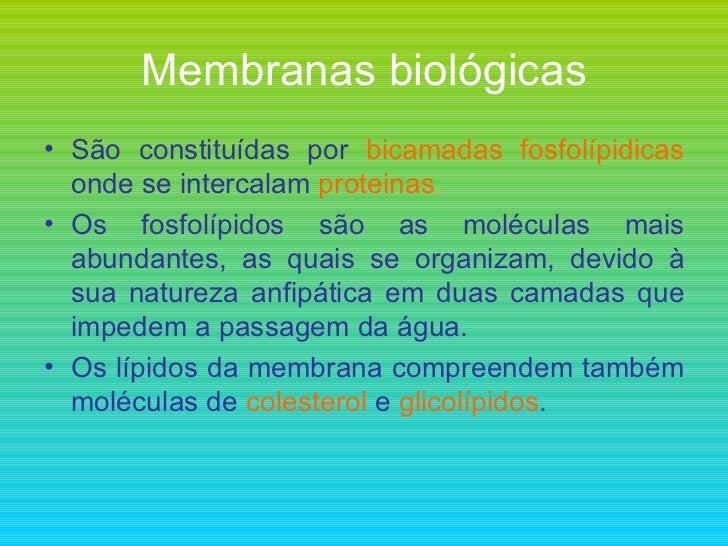 Membranas biológicas <ul><li>São constituídas por  bicamadas fosfolípidicas  onde se intercalam  proteinas . </li></ul><ul...