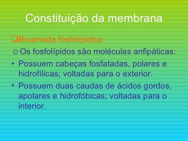 Constituição da membrana <ul><li>Bicamada fosfolípidica </li></ul><ul><li>Os fosfolípidos são moléculas anfipáticas: </li>...