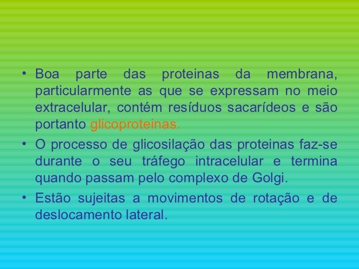 <ul><li>Boa parte das proteinas da membrana, particularmente as que se expressam no meio extracelular, contém resíduos sac...