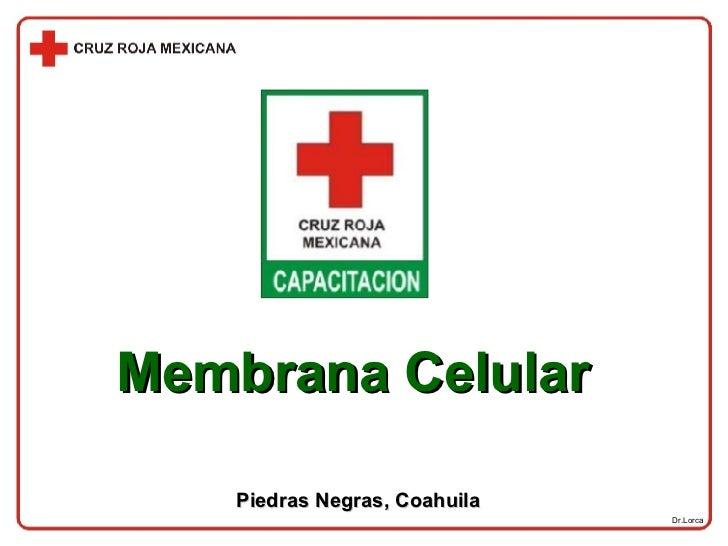 Dr.Lorca Membrana Celular Piedras Negras, Coahuila