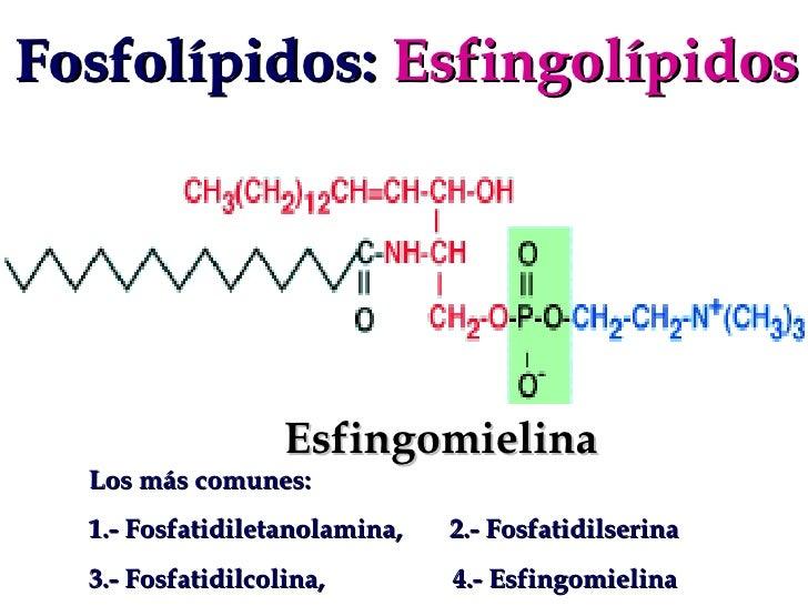 definicion esteroides anabolicos