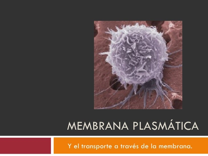 MEMBRANA PLASMÁTICAY el transporte a través de la membrana.
