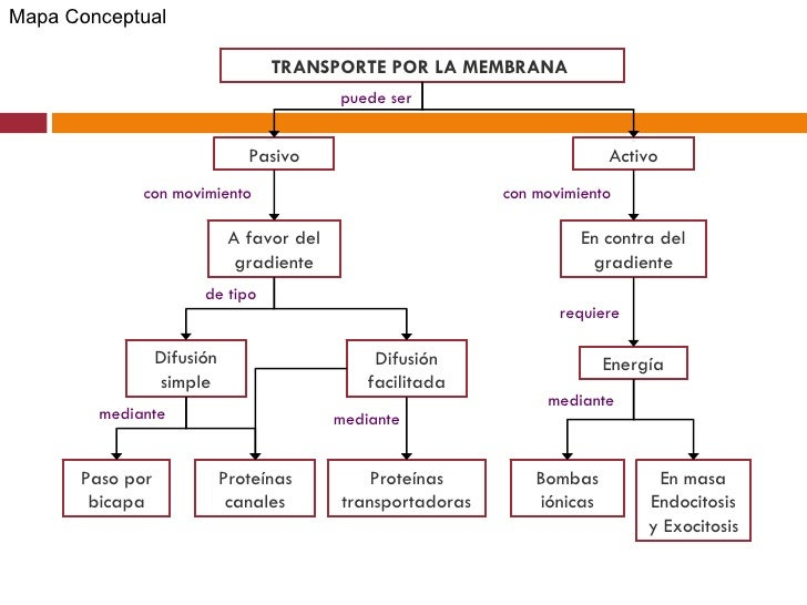 Resultado de imagen para MAPA CONCEPTUAL MECANISMOS DE TRANSPORTE CELULAR
