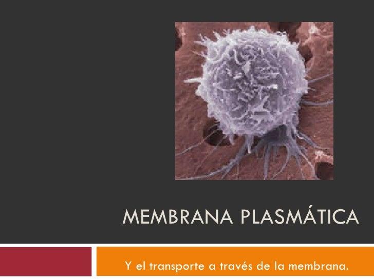 MEMBRANA PLASMÁTICA Y el transporte a través de la membrana.