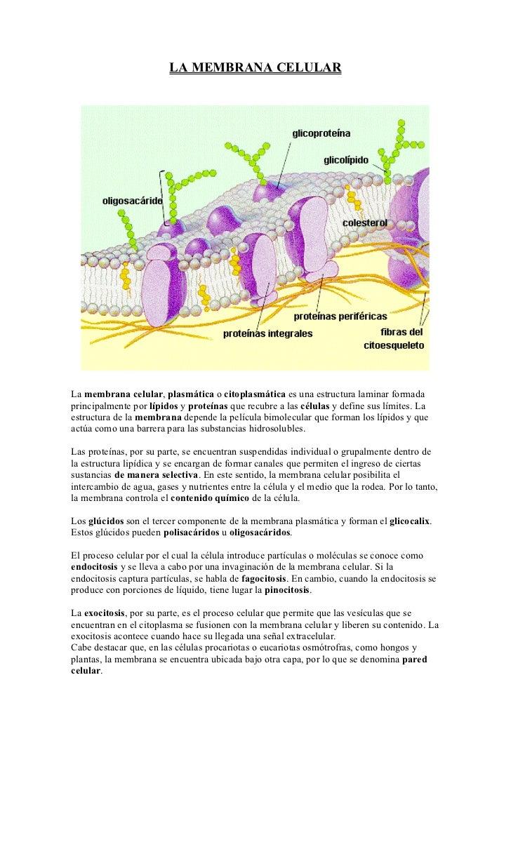 Membrana Celular Doc Escogido 1