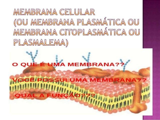  Toda a célula, seja procarionte ou eucarionte,apresenta uma membrana que isola do meioexterior: a membrana plasmática. A...