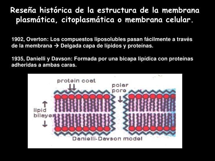 Membrana celular y transporte Slide 3