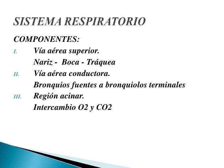 COMPONENTES:<br />Vía aérea superior.<br />Nariz -  Boca - Tráquea<br />Vía aérea conductora.<br />Bronquios fuentes a b...