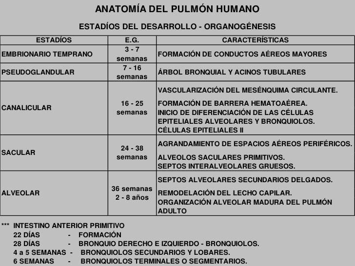 Bicarbonato: 2.8 mEq./L.