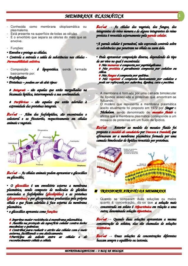 MEMBRANA PLASMÁTICA BIOVEST10.BLOGSPOT.COM – O BLOG DA BIOLOGIA 1 - Conhecida como membrana citoplasmática ou plasmalema. ...