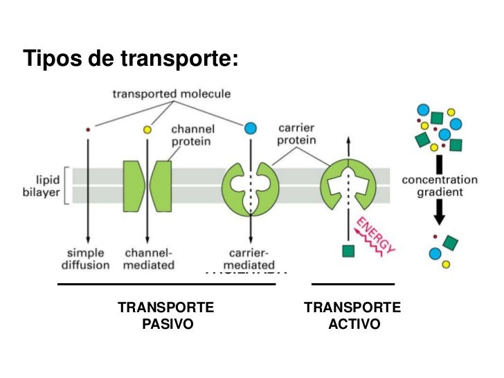 Membrana, transporte y organulos membranosos