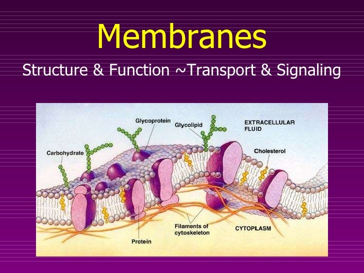 Membranes Structure & Function ~Transport & Signaling