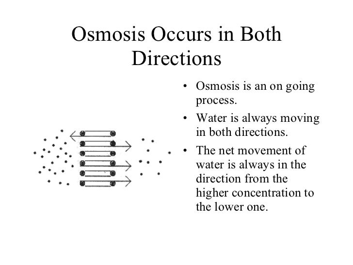 lab report on molecular movements transport across biological membranes Start studying biology lab: chapter 9 diffusion and osmosis and biological membranes can prevent the movement of molecules diffuse across membrane.