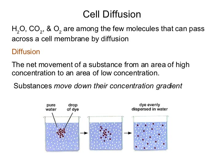 diffusion and cell membranes Osmosis osmosis is the diffusion of water from an area of high concentration to an area of low concentration across a membrane cell membranes are completely permeable.