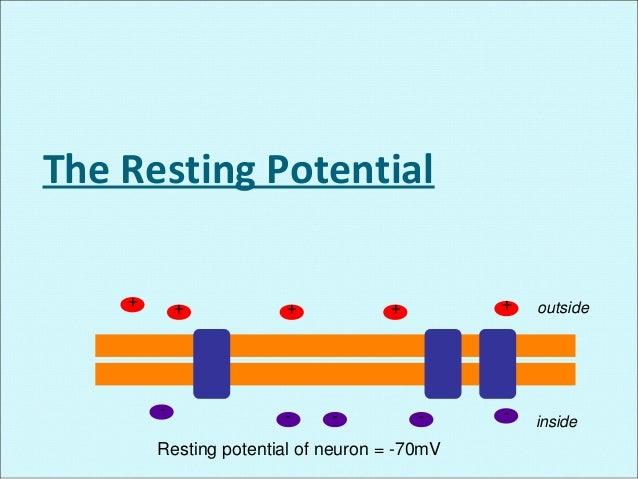 Membrane potential + action potential