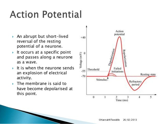 the action potential is an impulse of electrical activity essay The nerve impulse, or action potential,  action potentials are generated and propagated  the effect of sodium ions on the electrical activity of the giant.