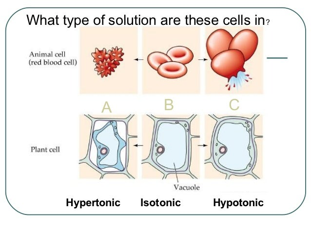 osmosis plant cells
