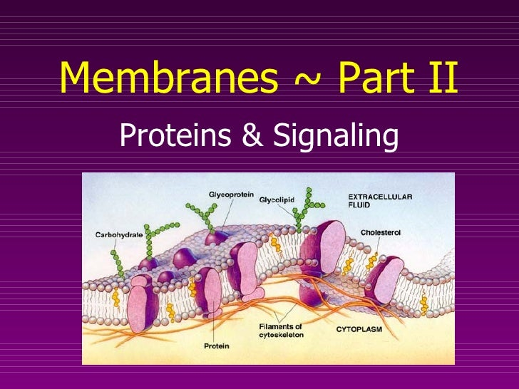 Proteins & Signaling Membranes ~ Part II