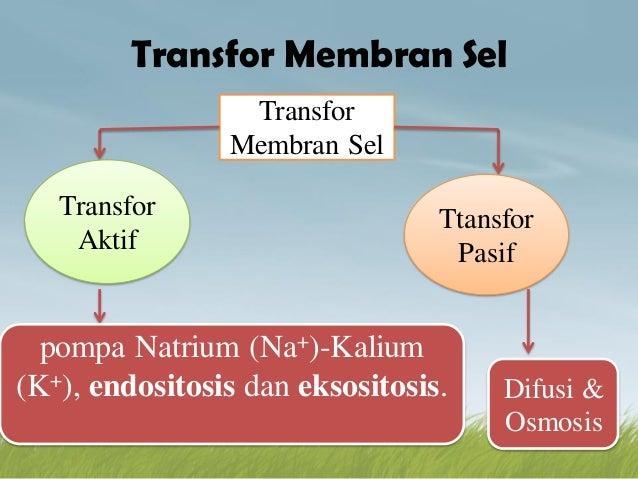 Membran sel 11 638gcb1448684338 11 transfor membran sel ccuart Choice Image