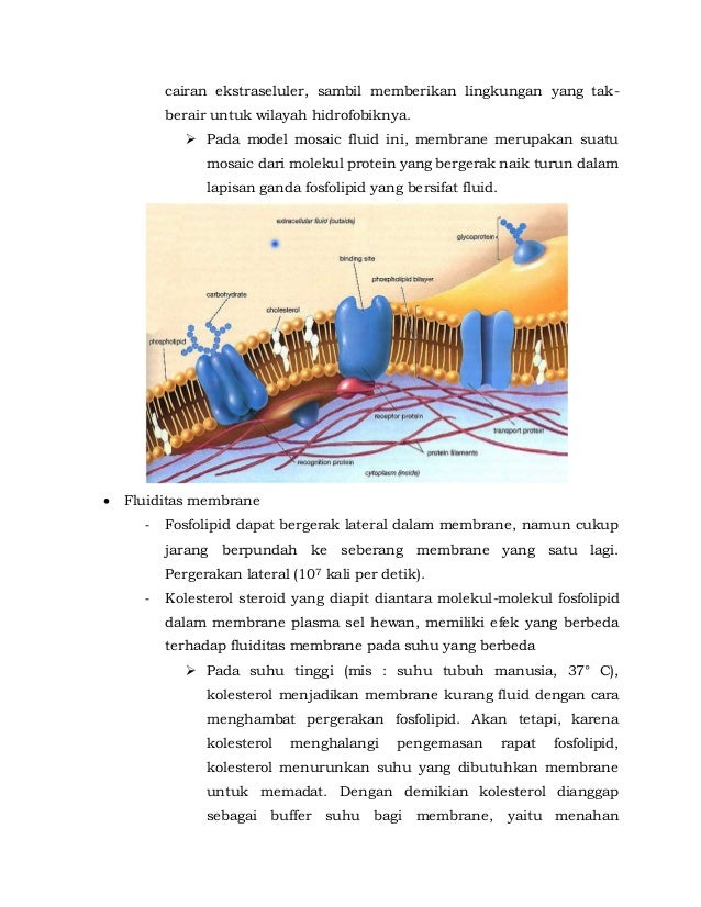 Biology membran sel biology campbell ccuart Choice Image