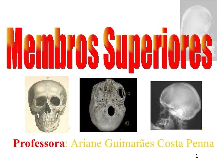 <ul><ul><li>Professora : Ariane Guimarães Costa Penna </li></ul></ul>Membros Superiores 1 3 2
