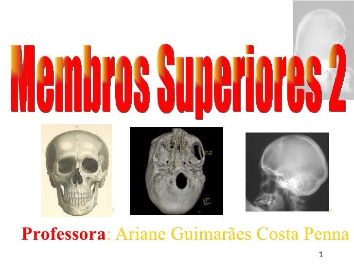 <ul><ul><li>Professora : Ariane Guimarães Costa Penna </li></ul></ul>Membros Superiores 2 1 3 2