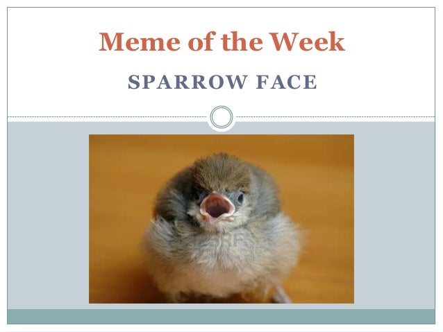Meme of the Week SPARROW FACE