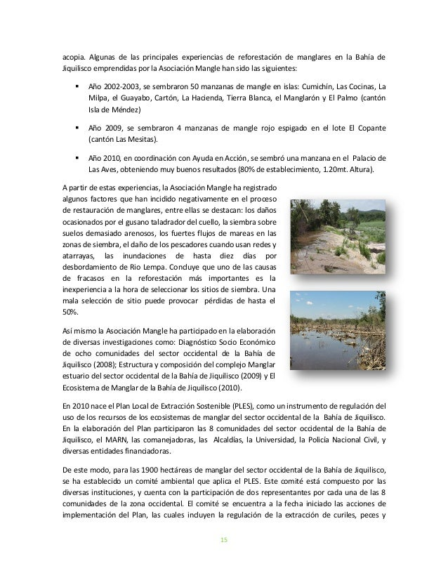 15acopia. Algunas de las principales experiencias de reforestación de manglares en la Bahía deJiquilisco emprendidas por l...