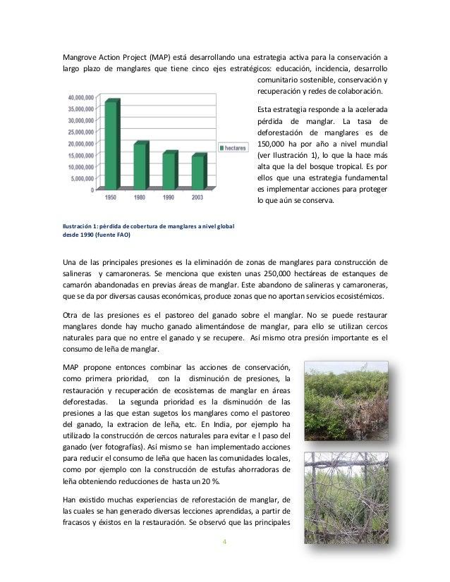 4Mangrove Action Project (MAP) está desarrollando una estrategia activa para la conservación alargo plazo de manglares que...