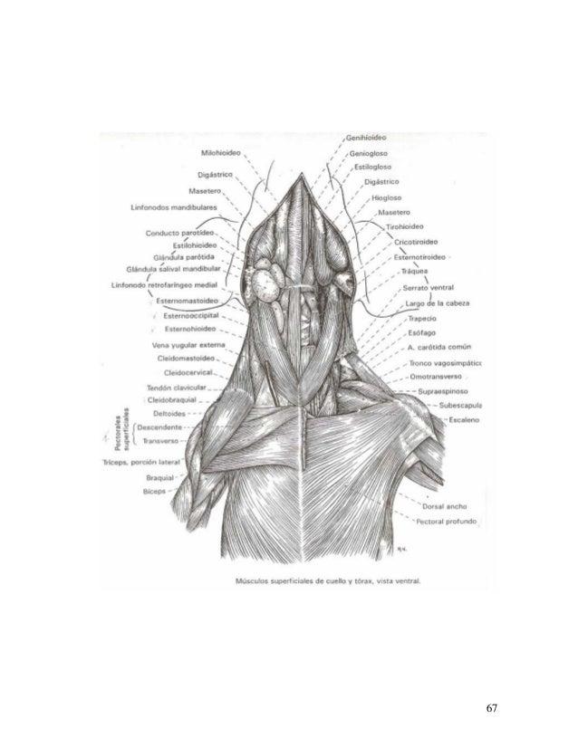 Memorias de Anatomía (UDG)
