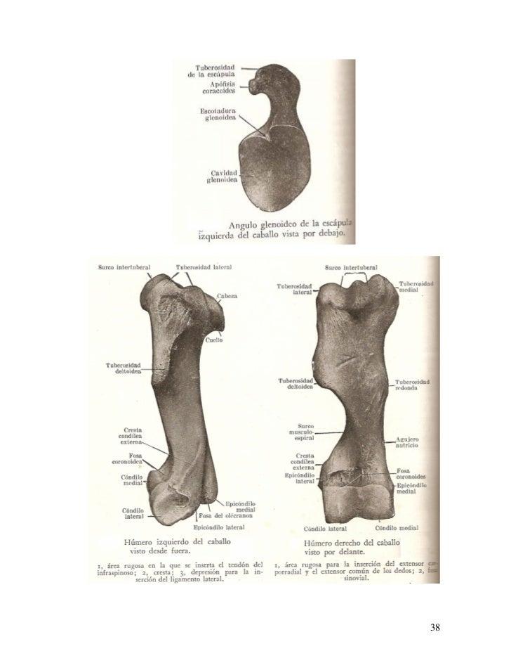 Clases De Anatomia