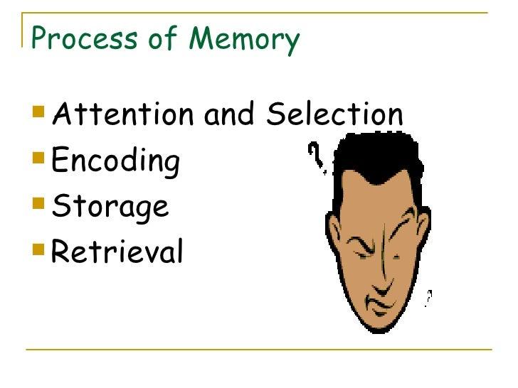 Process of Memory <ul><li>Attention and Selection </li></ul><ul><li>Encoding </li></ul><ul><li>Storage </li></ul><ul><li>R...