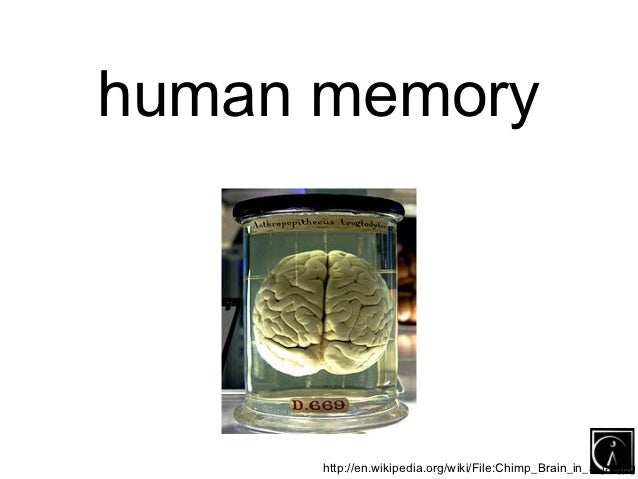 human memory      http://en.wikipedia.org/wiki/File:Chimp_Brain_in_a_jar.jpg