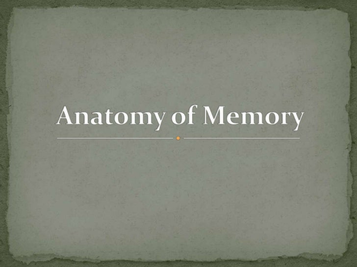  Short term memory activates the frontal lobe Long term memory activates the temporal lobe