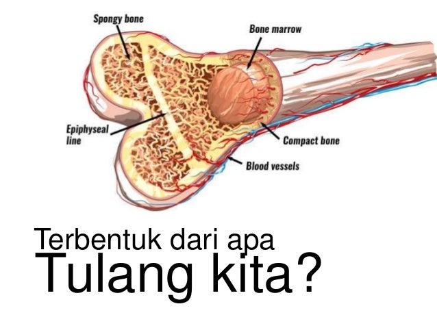Tulang kita? Terbentuk dari apa