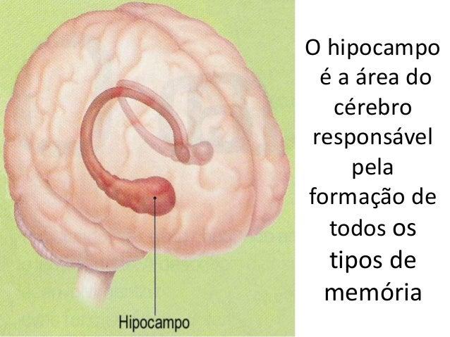 O hipocampo é a área do cérebro responsável pela formação de todos os tipos de memória MEMÓRIA DOS I