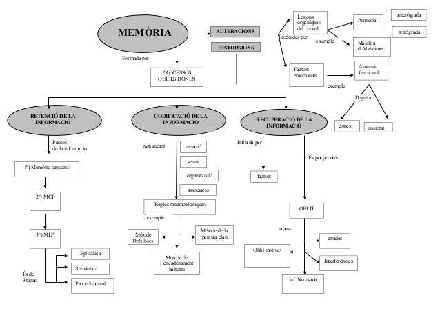 MEMÒRIA  anterògrada  Lesions orgàniques del cervell  ALTERACIONS  Produides per  Amnesia retrògrada  exemple  Malaltia d'...