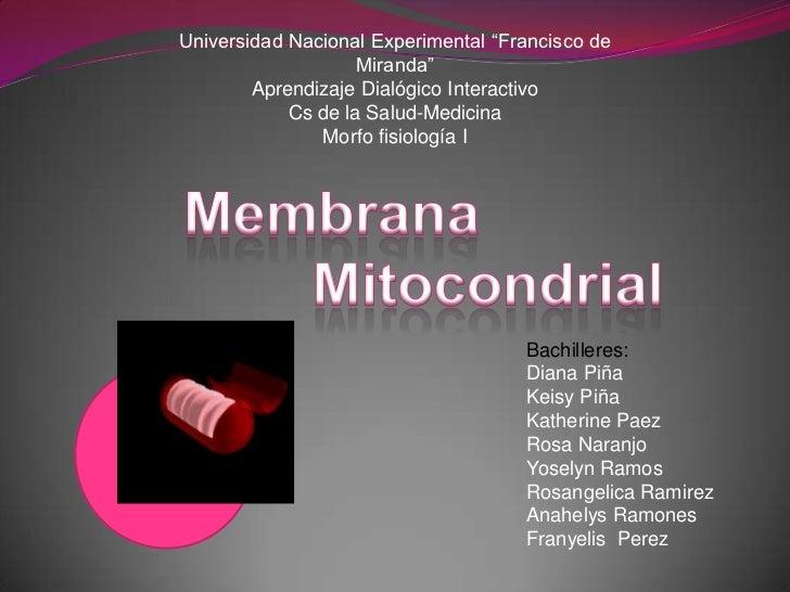"""Universidad Nacional Experimental """"Francisco de                    Miranda""""        Aprendizaje Dialógico Interactivo      ..."""