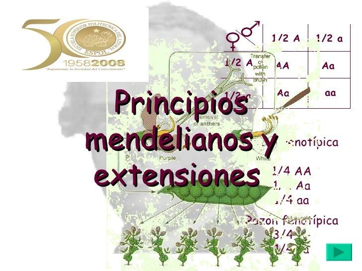 Razón fenotípica 3/4 A- 1/4 aa Razón genotípica 1/4 AA 1/2 Aa 1/4 aa Principios mendelianos y extensiones  AA Aa Aa aa 1/2...