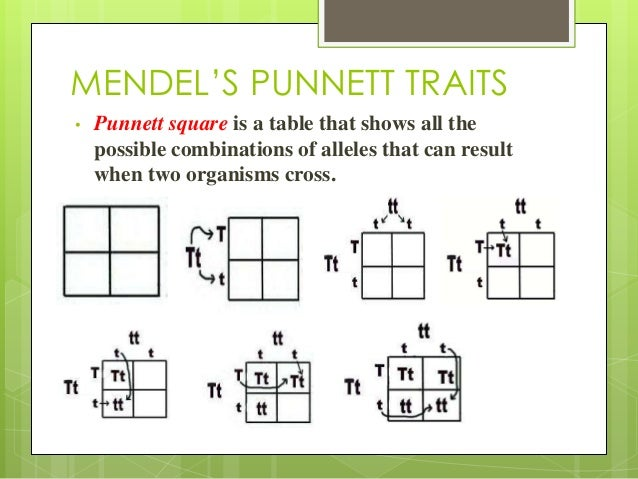 how to understand punnett squares