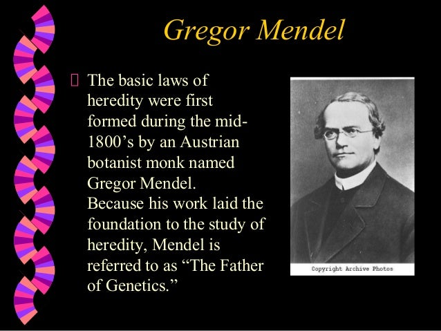 Gregor Mendel The basic laws of heredity were first formed during the mid1800's by an Austrian botanist monk named Gregor ...